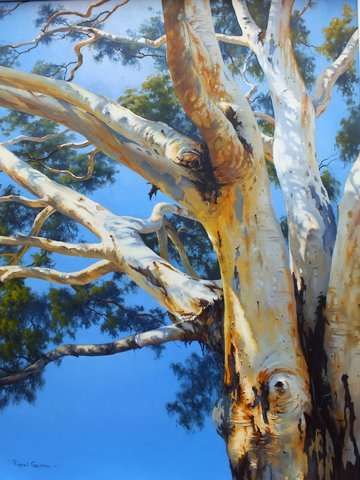 Branches of the River Red Gum