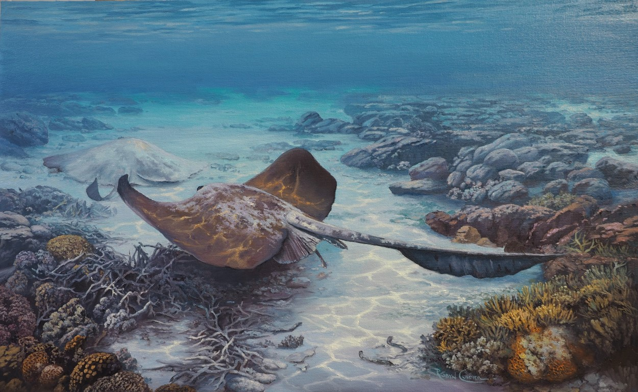 THE RESTING PLACE – COW TAILED RAY