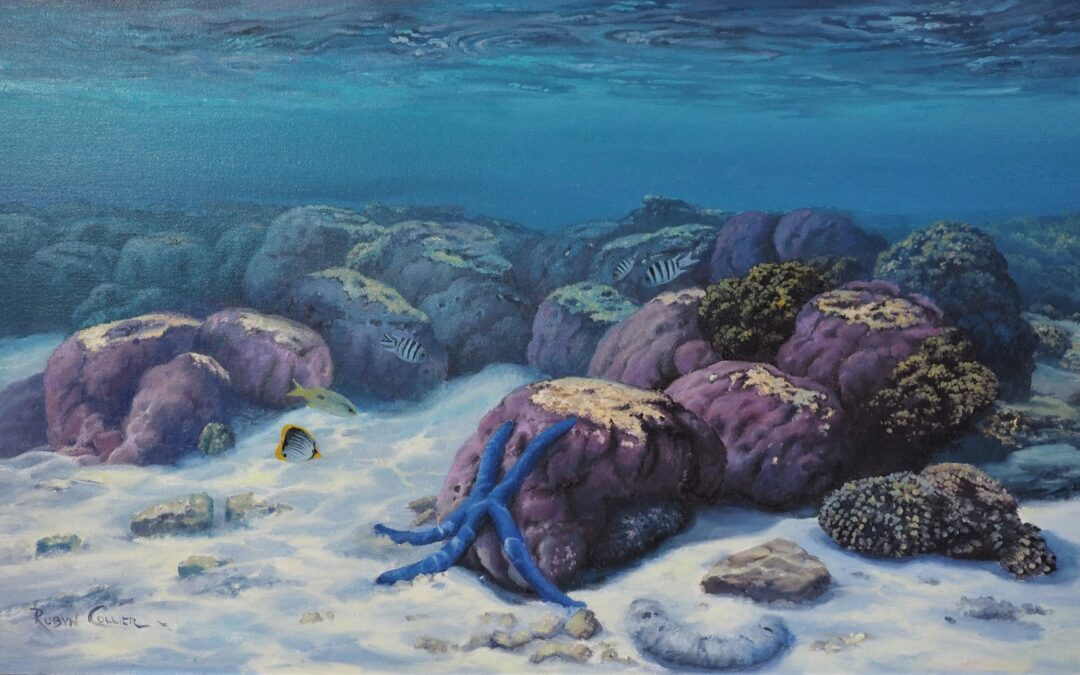 PURPLE BOULDER CORAL AND SEA LIFE